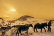 Horses in Hiriberri - Aezkoa