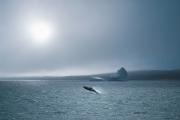 BelleIsle Strait whale